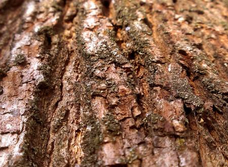 Стандарты Лесного Попечительского Совета (FSC) по сертификации лесоуправления
