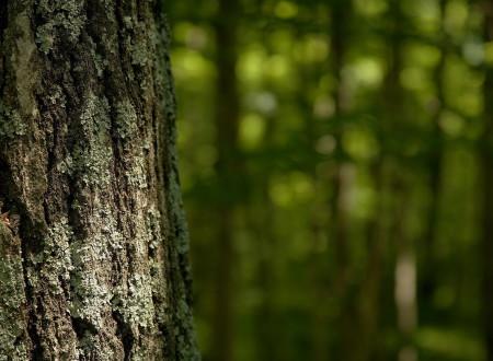 Стандарты Лесного Попечительского Совета (FSC) по использованию товарных знаков