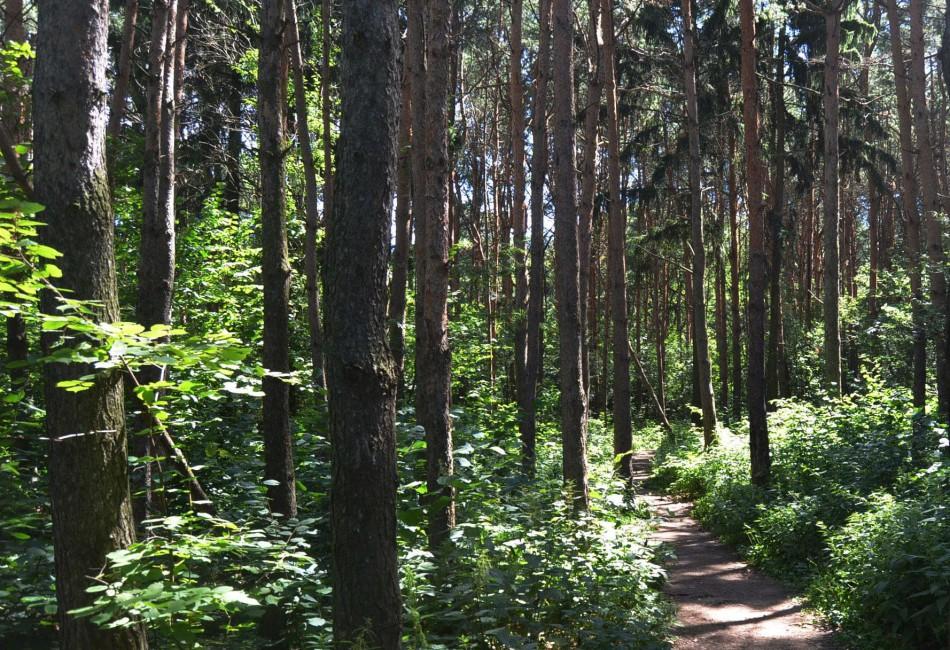 На Северо-Западе России в сертифицированных лесах создаются заказники