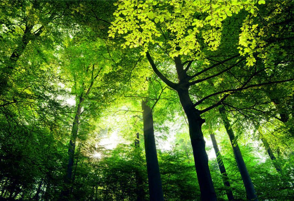 """Полевые испытания программы по проекту """"Transparent forest"""""""