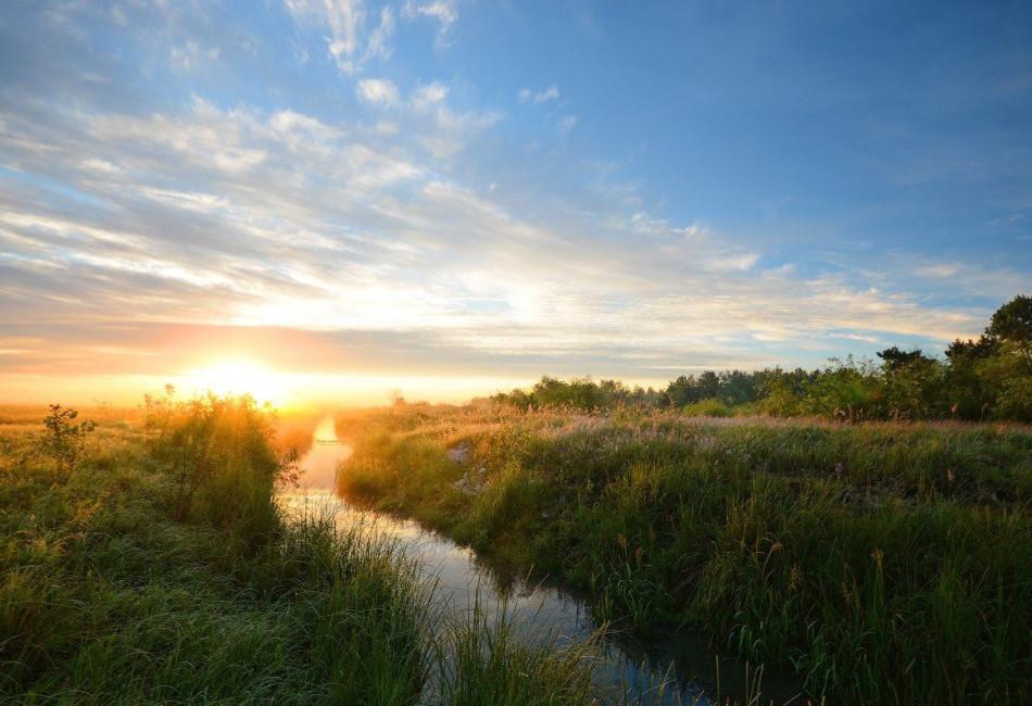 В Беларуси разработано «Руководство по подготовке к добровольной лесной сертификации в Беларуси»