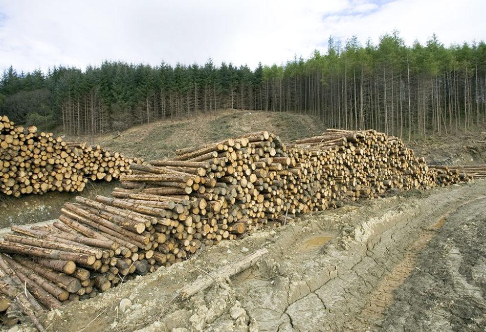 Позиция Координационного комитета FSC России по учету требований Решения 65 Генеральной ассамблеи в новой версии национального стандарта по лесоуправлению
