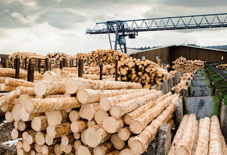 Конкурс WWF и FSC России: оценка зависимости лесоперерабатывающей промышленности от древесины из МЛТ