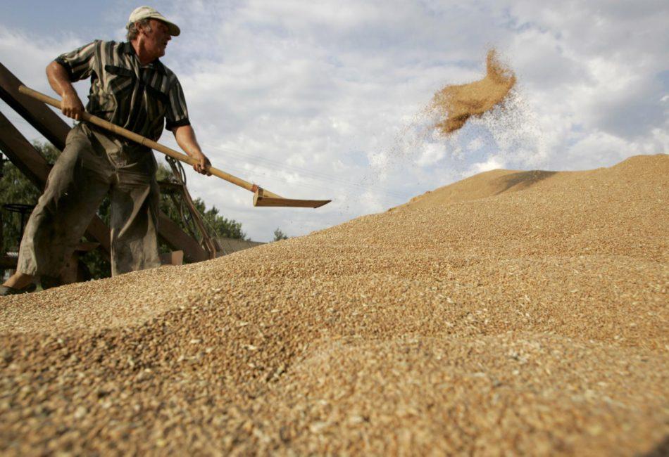 Минсельхоз признал ухудшение качества российского зерна