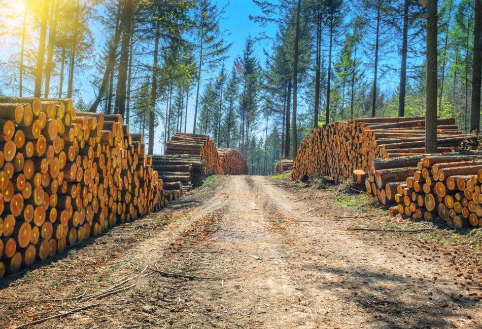 Вышла новая версия стандарта по контролируемой древесине FSC-STD-40-005 V3-1