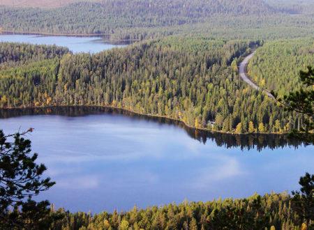 С 2018 года в России будут действовать новые Правила ухода за лесами