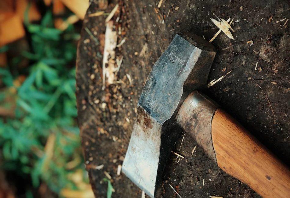 Совет Федерации призвал активизировать борьбу с нелегальной заготовкой древесины
