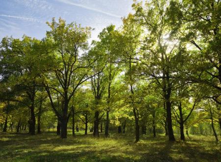 Международный центр FSC утвердил новое указание для директивы по контролируемой древесине.